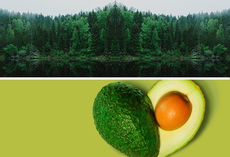 Trees-Avocado